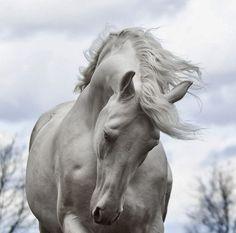 4901e-whitehorse.jpg (500×495)