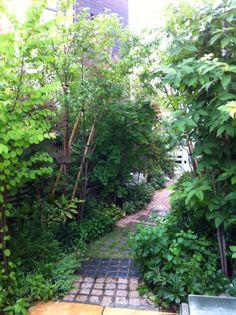 アプローチ植栽 / メンテナンス Plants / Maintenance