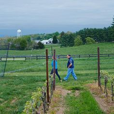Virginia Wineries that Jose Andreas likes