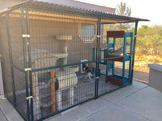 Cat Enclosure, Cat Room, Border Collies, Livestock, Diy Projects, Pets, Animals, Outdoor, Home Decor