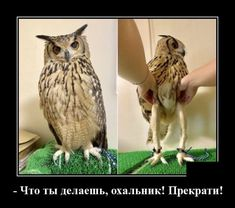 Owls actually have long legs underneath all that fluff - iFunny :) What Makes You Laugh, Make You Smile, Funny Animal Memes, Funny Animals, Owl Legs, A Husky, Funny Memes About Girls, Funny Girls, Weird World