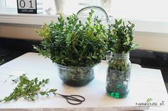 How To Preserve Boxwood Cuttings. Make your own beautiful boxwood wreaths that will last for years. Beautiful accessories for your home decor.