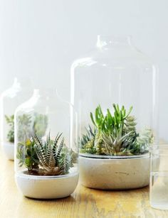 Sukkulente Pflanzen unter der Glashaube – Bild 6 Succulent plants under the glass hood – succulents as decoration – [LIVING AT HOME] Cacti And Succulents, Planting Succulents, Planting Flowers, Suculentas Diy, Cactus Y Suculentas, Window Plants, Air Plants, Diy Garden, Indoor Garden