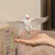 鳥フォトコンテスト「ブン」さん