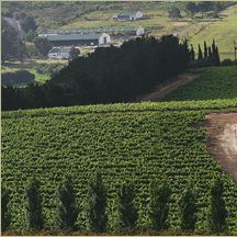 Walker Bay, South Africa (Hamilton Russell Vineyards)