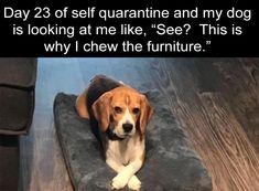 meme so true After Dark Funny Meme Dump 36 Pics Memes Humor, Funny Animal Memes, Stupid Funny Memes, Cute Funny Animals, Funny Relatable Memes, Funny Animal Pictures, Funny Dogs, Funny Dog Sayings, Animal Humor
