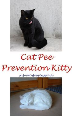 Spray To Keep Cats From Peeing On Furniture Cat Peeing