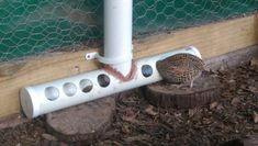 the Best ever Quail feeder - Google Search
