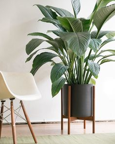 New Case Study® XL Cylinder with Wood Stand for your XL plants, available in White and Charcoal. To order call 323-933-0383 or email websupport@modernica.net  #casestudyceramics #Modernica #XL #plants #indoor #outdoor #planter #interior #modern #home #new