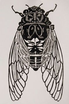 cicada print by christopherwassell on Etsy is so cool!This cicada print by christopherwassell on Etsy is so cool! Cicada Tattoo, Insect Tattoo, Illustrator, Bug Art, Motifs Animal, Insect Art, Bugs And Insects, Linocut Prints, Art Inspo