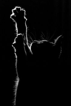 cat photography Ideas for tattoo dog cat black - cat I Love Cats, Crazy Cats, Cute Cats, Funny Cats, Cats Humor, Funny Horses, Adorable Kittens, Memes Humor, Funny Animal