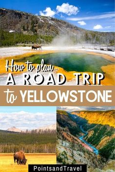 The ultimate road trip to Yellowstone National Park. How to Plan a Road Trip to Yellowstone. Follow this Yellowstone National Park itinerary for the best hikes, animal sighting tips and attractions in the park. Find tons of useful travel tips, lodging and restaurant suggestions! #yellowstone #montana Montana National Parks, National Parks Usa, Yellowstone National Park, Travel Usa, Travel Tips, Alaska Travel, Alaska Cruise, Travel Guides, Travel Destinations