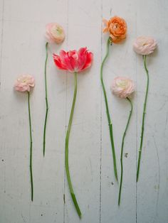 Agua Marina Blog: Kat Flower's Home Flower Workshop
