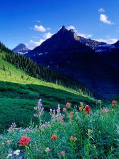Colourful Wildflowers and Mountain Backdrop Near Logan Pass, Glacier National Park, Montana, USA