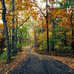 Experience Palestine, Texas - Fall in Love with Davey Dogwood Park