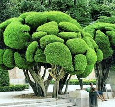Tropical Landscaping, Backyard Landscaping, Beautiful Gardens, Beautiful Flowers, Japanese Garden Backyard, Weird Trees, Miracle Tree, Magical Tree, Unique Trees