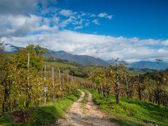 Taste Treviso: Italy's #Prosecco province
