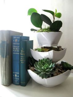 1000+ images about * Succulents, Cacti and Plants on Pinterest ...