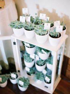 succulent favours | photo by Branco Prata - DIY wedding favors and flowers for a fall wedding, bride