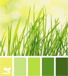 Color: Grassy Brights by Design Seeds - yellow green, light green, bright green, medium green, deep green.
