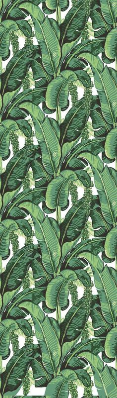 Banana Leaf Removable Wallpaper- Peel & Stick Self Adhesive Fabric Temporary Wallpaper-Removable-Wall Mural- FAST. EASY. Tropical Wallpaper BANANO LEAVES WALLPAPER. The wallpaper depicts famous forest of banano leaves. This removable wallpaper design is likened to the Beverly Hills Hotel Hollywood, and will instantly give any room a tropical vibe. REMOVABLE WALLPAPER FEATURES: Super simple to apply - simply peel off backing paper and stick the wallpaper against the wall (No need fo...