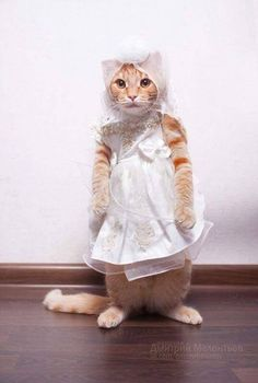TOP 42 Funny Cats and Kittens Pictures | Funny Animals, Funny Cat | DomPict.com