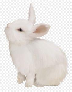 Rabbit Cartoon Drawing, Cute Bunny Cartoon, Kawaii Bunny, Rabbit Png, Rabbit Clipart, Cute Easter Bunny, Baby Bunnies, Bugs Bunny, Lion Live Wallpaper