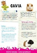 Leuke leesteksten over verschillende dieren (bedoeld voor spreekbeurten, maar ook geschikt om zo gewoon te lezen)
