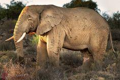 Shot By Nicci - Nicci Romanovsky Photography. Real Estate Photography, Glamour Photography, Professional Photography, Animal Photography, Albany Western Australia, Westerns, My Photos, Elephant, Animals