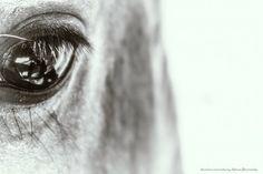 """""""Me reflejo en tu mirada"""" de Adriana Borovinsky - Argentina - Julio/2016"""