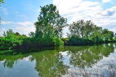 El Amazonas de La Mancha  Río Bullaque  #lamanchahumeda #photography