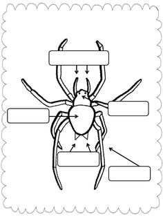 Spider Labeling for charlottes web science 1st Grade Science, Kindergarten Science, Elementary Science, Science Classroom, Kindergarten Worksheets, Teaching Science, Science Activities, Preschool Themes, Classroom Resources