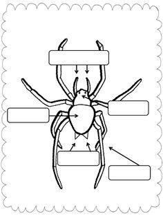Simply Second Grade: Spider Unit Plans {THANKS, Amy & Cara!} plus a FREEBIE