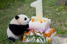 中国の子パンダ、米国の動物園で誕生日を祝う