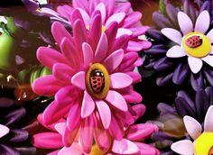 18ème jour : Fleur...La fleur du jardin sera pour plus tard... la mienne sert plutôt comme bouchon à bouteille..... !!