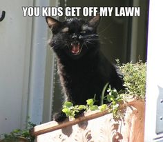 grumpy old man cat funny-as-hell