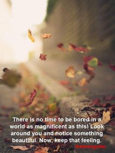 Find images and videos about nature, autumn and fall on We Heart It - the app to get lost in what you love. Butterfly Wallpaper, Nature Wallpaper, Wallpaper Quotes, Creative Photography, Nature Photography, Paradise Places, Autumn Lights, Pics Art, Beautiful Butterflies