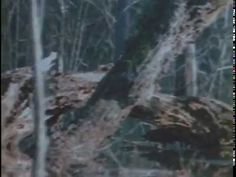The Legend Of Boggy Creek ( 1972 ) - YouTube