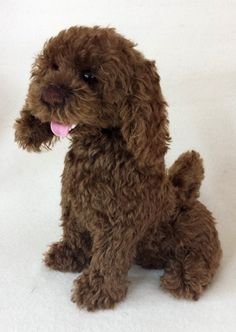Chocolate brown poodle. Created with mohair and German glass eyes by Isabella Hoffmann. Visit our website for more info on classes and online shows.