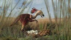 Carakiller bird