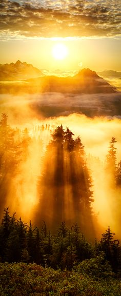 Evergreen Mountain Lookout Photography Cropped for Pinterest by Michael Matti-5