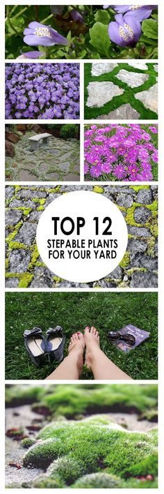 Top 12 Stepable Plants for Your Yard ~ Bees and Roses If you don't enjoy tip toeing around your yard to avoid your plants, it may be time to bring in some shrubs that tolerate foot traffic. Here are 12 stunning plants that stand up well when walked on. Garden Shrubs, Garden Edging, Garden Paths, Shade Garden, Garden Beds, Home Landscaping, Front Yard Landscaping, Sidewalk Landscaping, Ground Cover Plants
