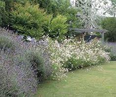 Resultado de imagen para gauras jardin