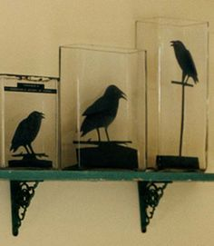 I love ravens and crows. This is a fun way to use plain vases you probably already have laying around. You just need some black card stock and a template.