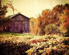 Country Home Decor, Rustic Home Decor, Barn Photography, Autumn Landscape, Brown, Gold, Green, Vineyard Photography, Tuscan Decor.