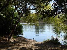 Río Cau Cau desde el Jardín Botánico de Isla Teja, Valdivia