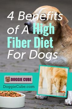 A diet with sufficient fiber in dog food is important for dogs. Discover the benefits of a high fiber diet for dogs.