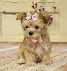 If you want to die of cuteness overload check out all the adorable puppies on this online pet shop.