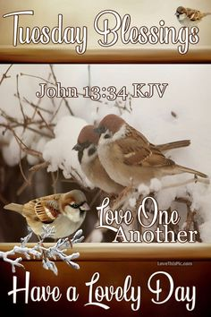Love One Another Tuesday Blessings Hump Day Quotes, Saturday Quotes, Weekend Quotes, Monday Quotes, Good Morning Tuesday, Happy Tuesday, John Kjv, Tuesday Greetings, Days Of Week