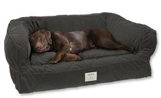Lounger Deep Dish Dog Bed. Avery would love this!!